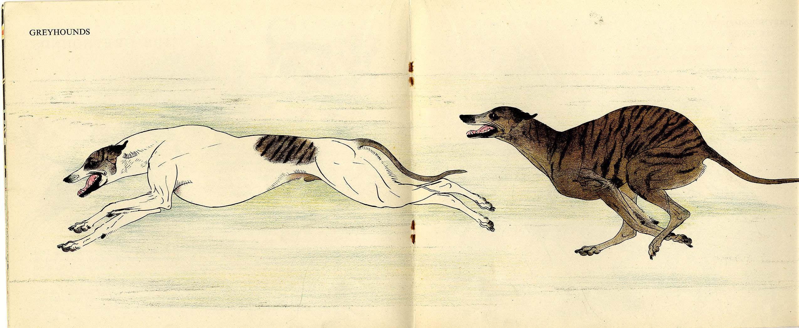 Maurice Wilson, Dogs 1950 for PUFFUN Books
